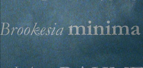 Brookesia minima Ulrike Draesner #7terSprung